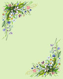 Poppies. Flower decorative background. Watercolor isolated on green background royalty free illustration