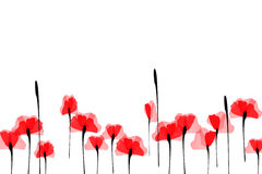 Free Poppies Royalty Free Stock Photography - 11989787