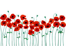 Poppies. Red poppies on a white background vector illustration
