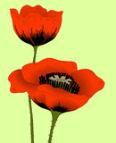 Poppies. Vector hand drawn fantasy poppies on yellow Royalty Free Stock Images