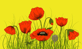 Poppies. Vector hand drawn fantasy poppies and grass Stock Photos