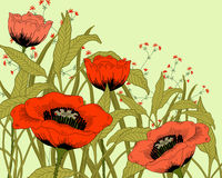 Poppies. Vector hand drawn fantasy poppies and leaves Royalty Free Stock Photos