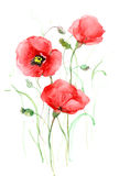 Poppies. Red poppy flowers (Cbm painting royalty free illustration