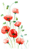 Poppies. Red poppy flowers (Cbm painting Royalty Free Stock Photography