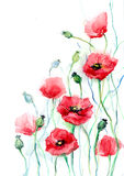 Poppies. Red poppy flowers (series C Royalty Free Stock Images