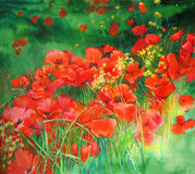 Poppies. Watercolor painting of green flowerbad with red poppies vector illustration