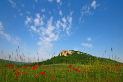Poppies. Stock Images