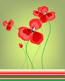Poppies. Lovely red poppies over green background Royalty Free Stock Image