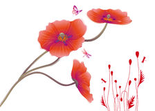 Free Poppies Royalty Free Stock Images - 9336919