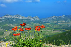 Poppies above Patrimonio, Corsica. View with red poppies above Patrimonio, Corsica, France Royalty Free Stock Photo