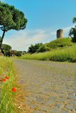 Poppies on Appia antica Street in Rome. (Italy Royalty Free Stock Photo