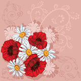 Poppies background Stock Image