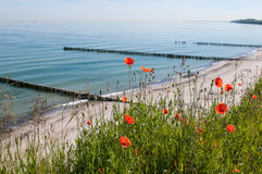 Poppies on the Baltic coast Stock Photography