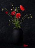 Poppies on black background Stock Images