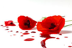 Poppies with bloody Stock Images
