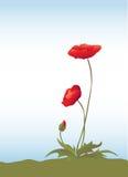 Poppies on blue sky vector illustration