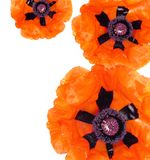 Poppies border Royalty Free Stock Photography