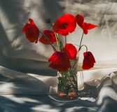 Poppies bouquet. The poppy is a bold, whimsical flower with a dark, interesting center Stock Photos