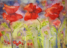 Poppies in bright summer colours. The dabbing technique gives a soft focus effect due to the altered surface roughness of the paper. GVP1524 royalty free illustration