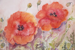 Poppies and buds watercolour painting Royalty Free Stock Photo