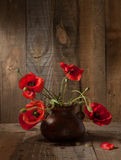 Poppies in clay pot Stock Photos