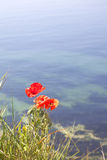 Poppies on a cliff top Royalty Free Stock Photography