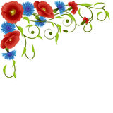 Poppies and cornflowers Stock Images