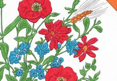 Poppies and cornflowers in the summer. Royalty Free Stock Image