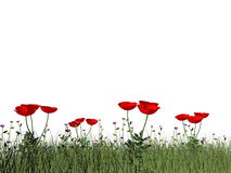 Poppies - 3D render Royalty Free Stock Photography
