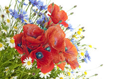 Poppies, daisies ,cornflowers Stock Photos
