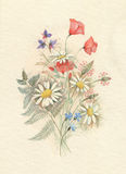 Poppies and daisies. Delicate bouquet of grasses, poppies and daisies Stock Image