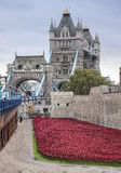 Poppies display at the Tower of London. Tower Bridge and the Tower of London surrounded by ceramic red poppies in colour. These poppies have been laid out on the stock photography