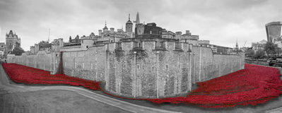 Poppies display at the Tower of London. Monochrome of the Tower of London surrounded by ceramic red poppies in colour. These poppies have been laid out on the stock image