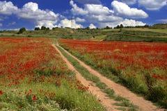 Poppies field Stock Photos