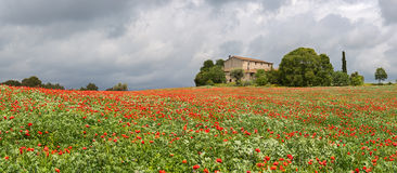Poppies field around a rural country house Stock Photos