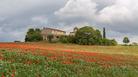 Poppies field around a rural country house Royalty Free Stock Image