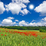 Poppies field and blue sky Stock Photography