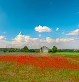 Poppies field and cloudy blue sky Stock Image