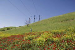 Poppies field in Kirgizstan Stock Photo