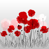 Poppies. Field of red poppies on abstract grey background Royalty Free Stock Image