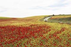 Poppies field road Stock Photo