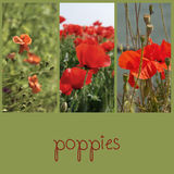 Poppies fields collage Royalty Free Stock Photography