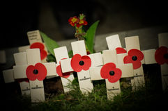 Poppies by flashlight. Flashlight beam illuminating wartime commemorative poppy crosses in a graveyard Stock Photos