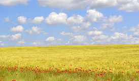 Poppies flowers field. Blue sky with clouds stock photo