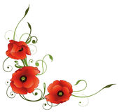 Poppies, flowers, floral. Elegant tendril with poppies, green and red Stock Image