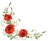 Poppies, flowers, leaves Stock Photos