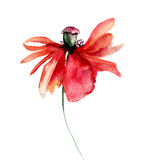 Poppies flowers with petal fall off Stock Photography