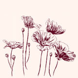 Poppies flowers vector illustration Stock Photo