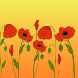 Poppies. Poppies on gradient yellow background Royalty Free Stock Photography
