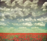 Poppies and grass with sky Stock Images